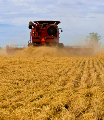 Supply Chain Scene, image of a combine in a wheat field