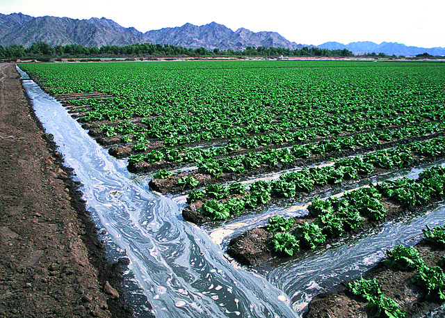 Image of lettuce field with irrigation ditches in Arizona with mountains in background