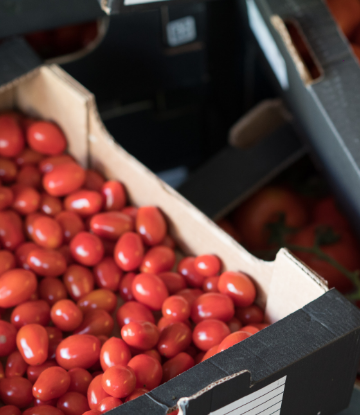 Supply Chain Scene, an open box of fresh, small tomatos