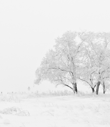 SCS, image of a snowy field with snow covered trees